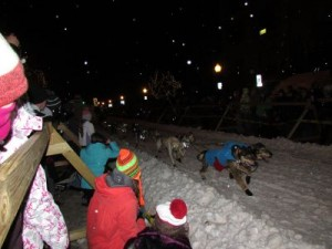 Sled dogs hit the trail.