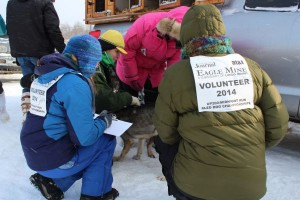 2014 UP 200 Dog Sled Race in Marquette, Michigan