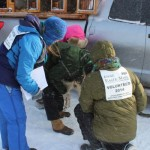 Dr. Karen Mallum and volunteers examine a Silent Night Sled Dog