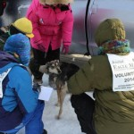 Dr. Karen Mallum checks a dog with Amber Evans and volunteers.