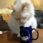 A stolen cup of coffee