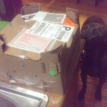 Arlo was very interested in the box when they arrived