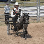 One of the contestants and her beautiful roan mini driving during the horse show 2015 Marquette County Fair