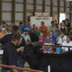 Owen showing his last steer at the Livestock auction during the Marquette County Fair 2015