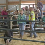 Young girl showing her 4-H pirde and her hefty pig during the Livestock Auction at the MQT County Fair 2015