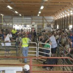 View from the front of the barn with the great turnout for the 4-H Livestock Sale and Win the Meat 2015