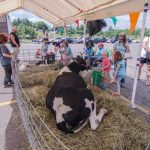 Big cow laying out for kids to enjoy.