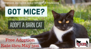 Donate to UPAWS and ask about the barn cat sale!