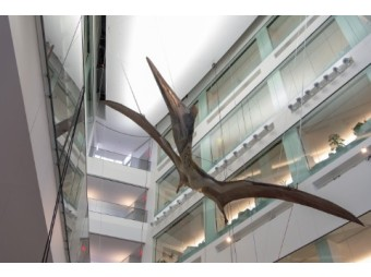 Dr. Michael Cherney Interview about Giant Pterosaur at U-M Museum of Natural History