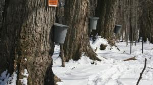 Celebrating the Long Anticipated Arrival of Spring and Maple Sugaring Season in Pure Michigan