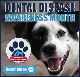 Dental Disease Awareness Month
