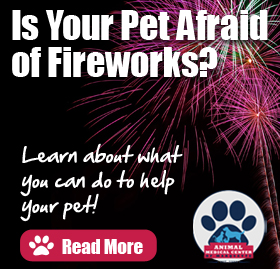 Help Your Pet Deal with Fireworks