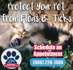 Learn About Flea And Tick Protection