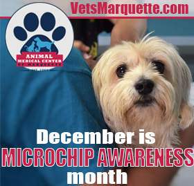 Get Your Pet Microchipped