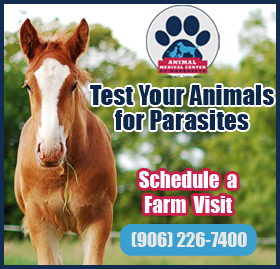 Test Your Pets for Parasites