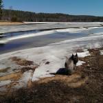 Dead River Ice Floes April 17 2015 04