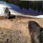 Dead River Ice Floes April 17 2015