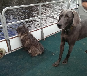 Arlo and Oliver Dogs Enjoying the Pontoon Boat Ride