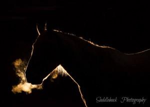 Taken by Lauren Bareiss- Saddleback Photography