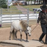 One of the Mini horse show competitors doing Trail with her mini at the Marquette County Fair 2015