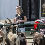 Girl at the petting zoo set up in the Marquette County Fair 2015