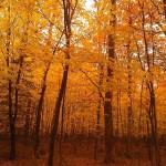 autumn foliage on presque isle in Marquette Michigan photo by nancy longtine