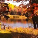 fall foliage in the backyard by Nancy Longtine