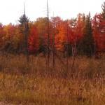 fall foliage photo by Nancy Longtine