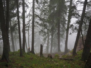 Foggy Scary Woods