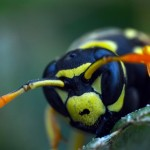 Wasp Angry Birds and Bees Marquette Stinging