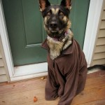 German Shepherd Dog in a Brown Fleece Jacket