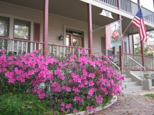 The azaleas outside the River Park In in Green Cove Springs, FL