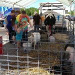 The petting zoo was definitely a hit at Econo Foods today!