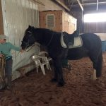 Madison the Horse from Willow Farms