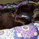 stanley-the-black-cat-2