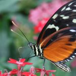 Butterfly at the Wings of Mackinac Butterfly Conservatory on Mackinac Island - Photo by MPL Photography