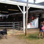 Fair goers enjoying the cow showing.