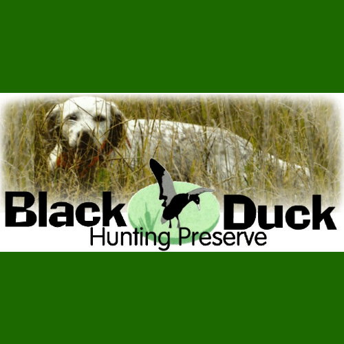 Call Walt Noa at Black Duck Hunting Preserve to set up your dog training session at 399-0557