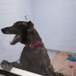 """One of the """"Real Life"""" rooms with Austin, a dog who has been with the shelter for a while."""