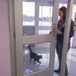 The first kitty escape at the new shelter.