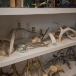 Check out this cool deer antler art!