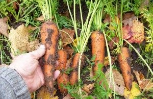 Jim Isleib - Alger Country MSU Extension Beginning Farmer Webinar Series January to April 2020