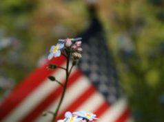 Remembering Veterans November 11th