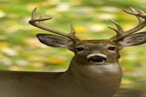 Firearm deer hunting begins Nov. 15 2020