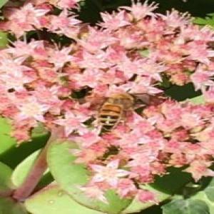 PWPL presents  Bixby's Beginning Beekeeping June 16, 2020