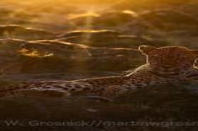 NMU Alumnus Grosnick Wins Wildlife Photography Grand Prize August 25, 2020