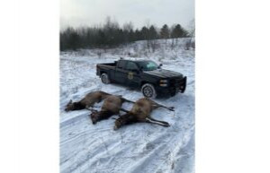 Three northern Michigan men arraigned in 2019 Pigeon River Country elk poaching case January 25, 2021
